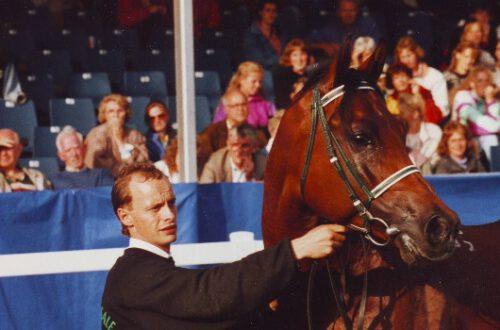 Sambist (Balaton x  Stihia by Topol) - high-class racehorse